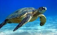 sukamade beach turtle tour